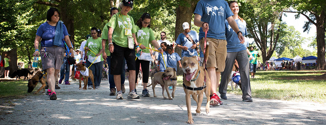 2018 Walk for the Animals